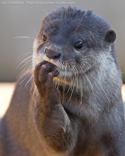 Pondering Otter Ponders