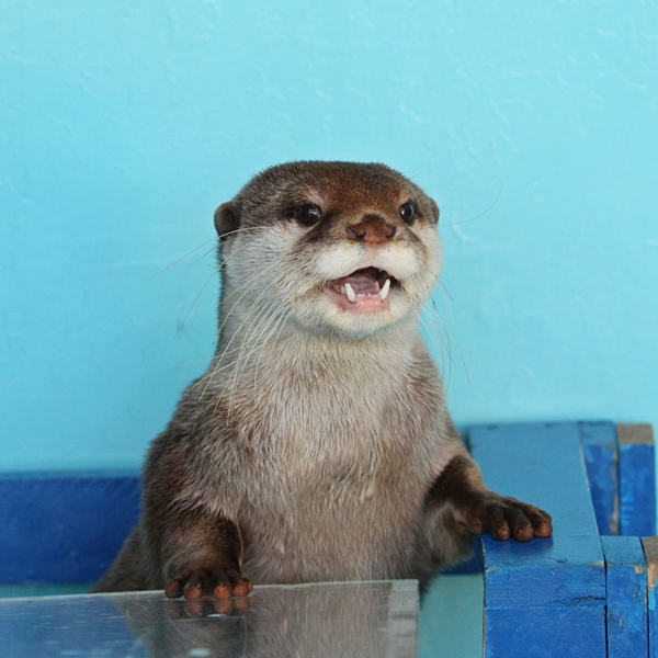 I Can Help the Next Otter in Line!