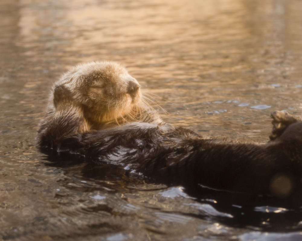 Otter Is Not Listening