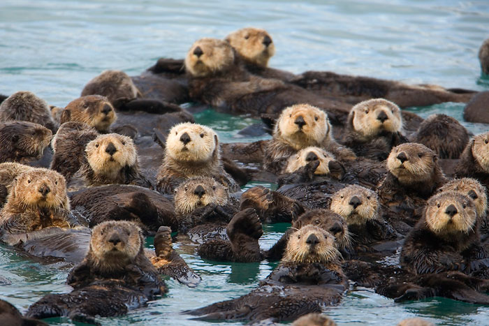 Fuzzy Raft Party