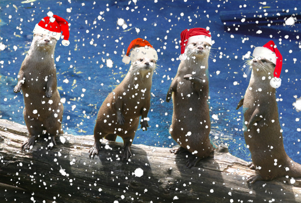 Festive Otters Are Festive