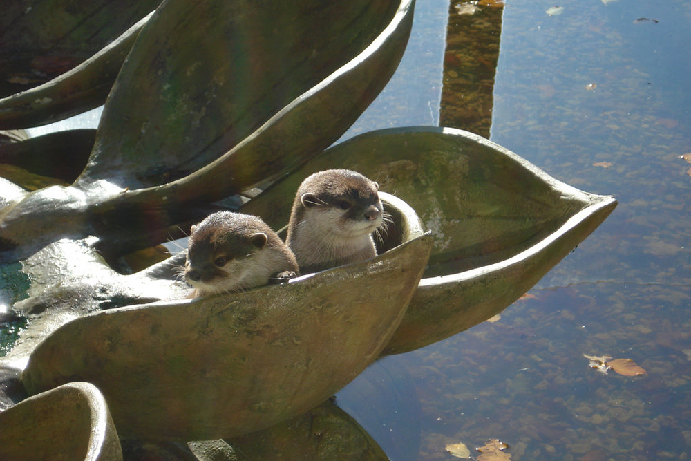 Otters Hang Out in Their Cement Leaf