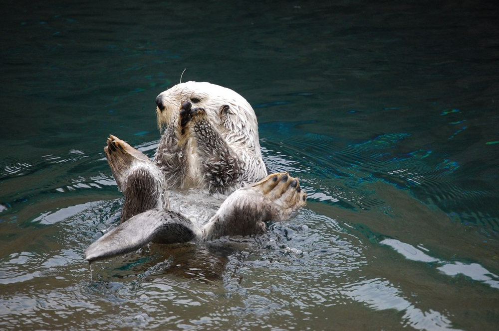 Clap Your Hands If You Like Otters