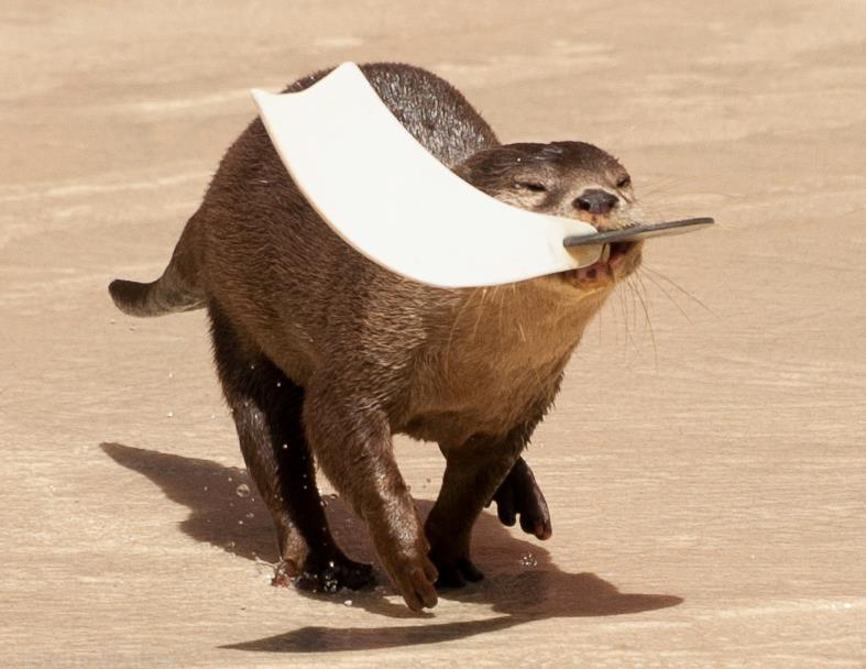 Otter Has an Urgent Delivery to Make