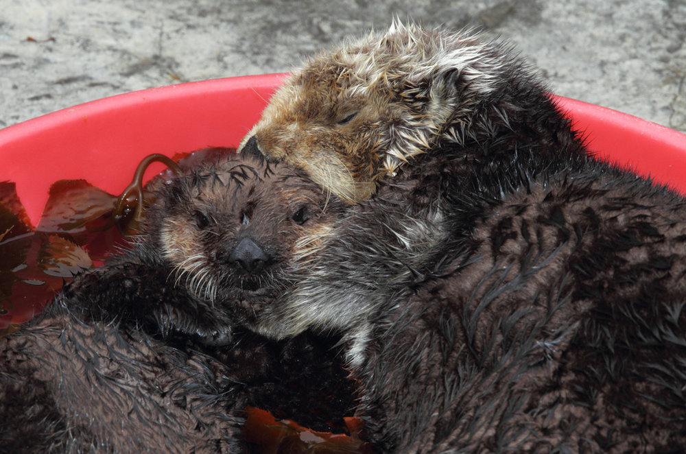 Cuddle Time in the Wading Pool