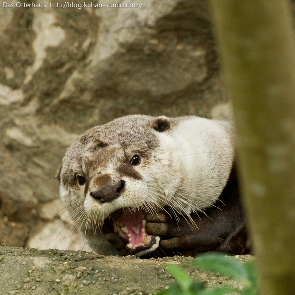 Stop Thief! That Otter Stole My Fish!
