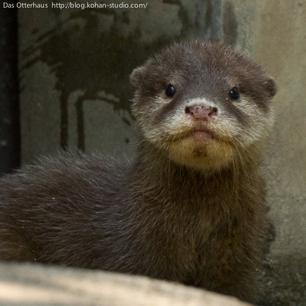 Otter Sits Up Straight for Portrait