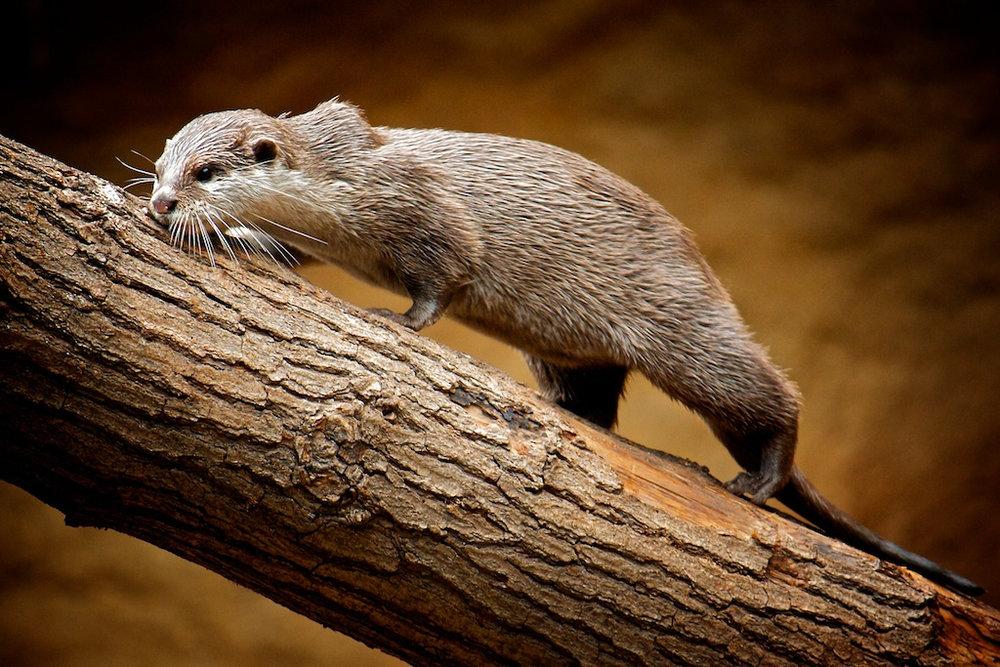 Otter Goes Onwards and Upwards