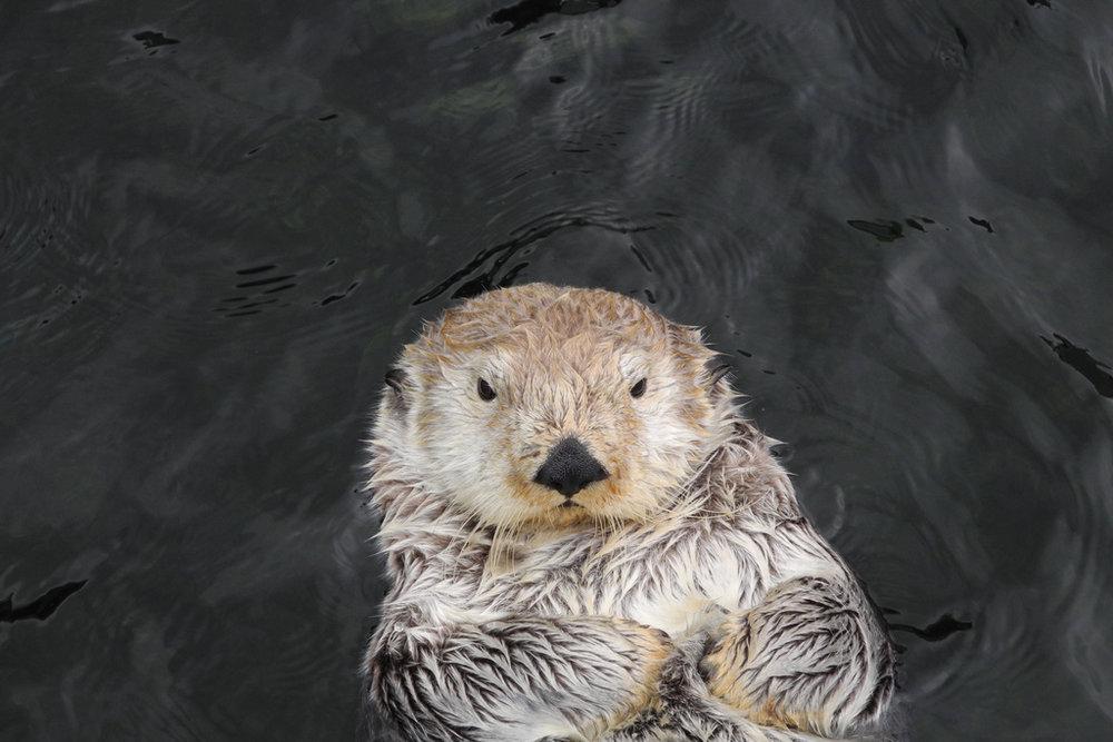 Grumpy Otter is Grumpy