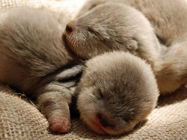 New Otter Pups at Santa Barbara Zoo