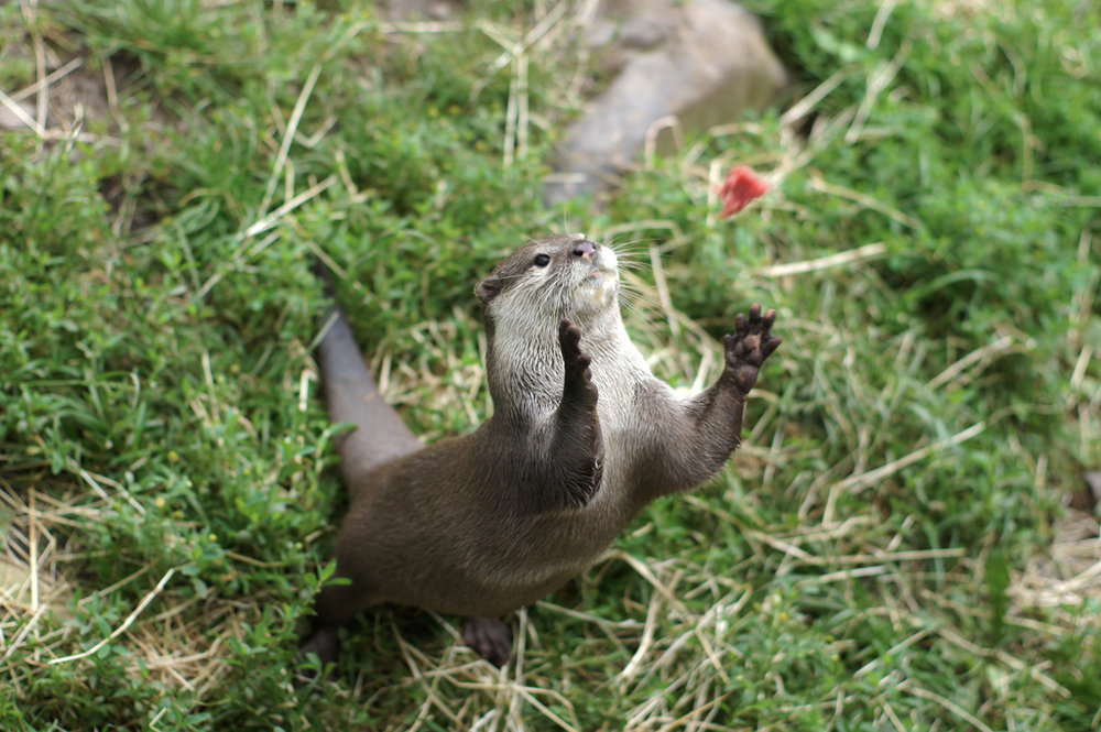 Otter Catches Some Fish
