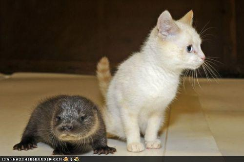 Otter and Kitten Are Friends