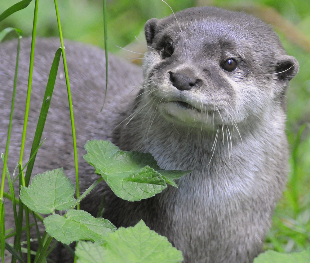 What Is Otter Seeing?