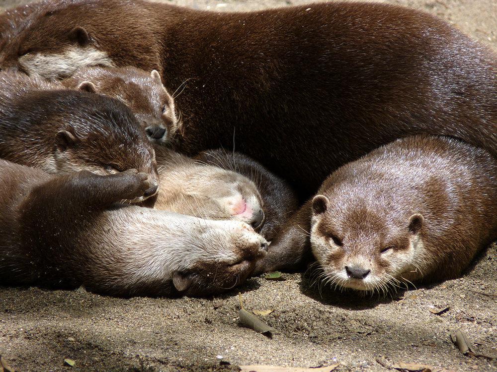 Otter Nap Pile