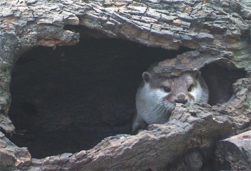 Otter Hideout