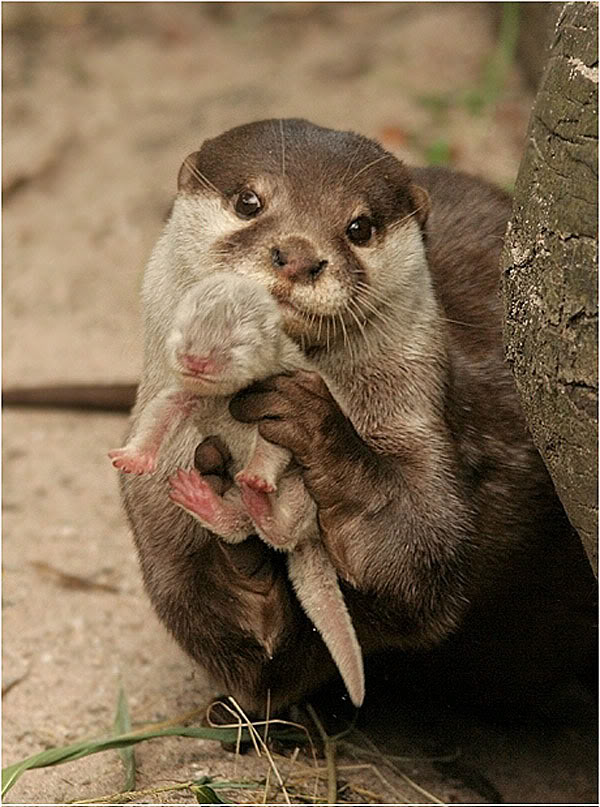 Mother Otter Shows Off Her Pup