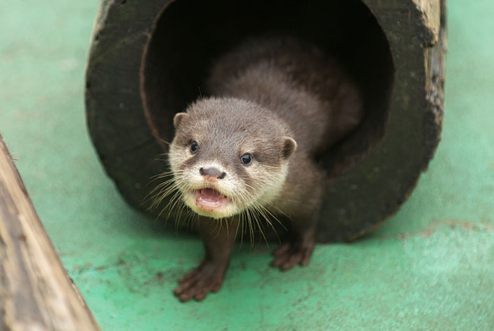 Otter Has a Very Cheery Hello!