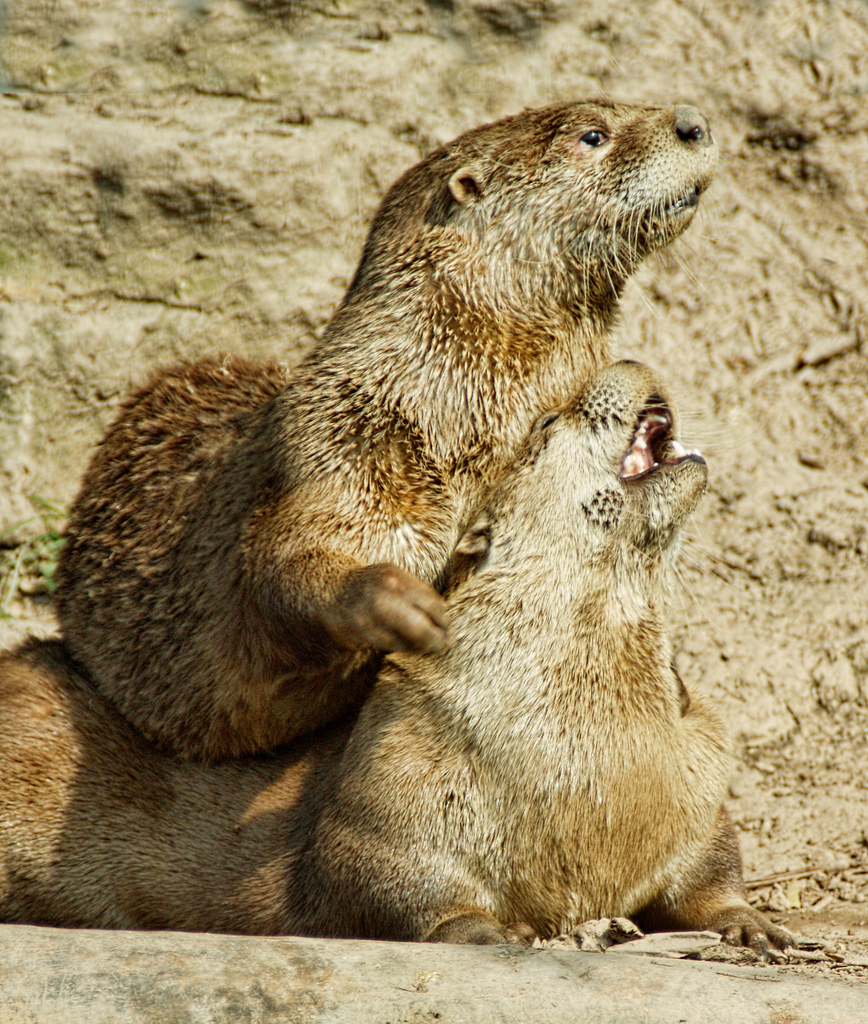 Otter Massage