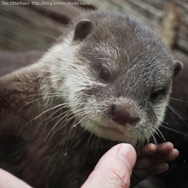Warning: Do Not Tease the Otters! 2