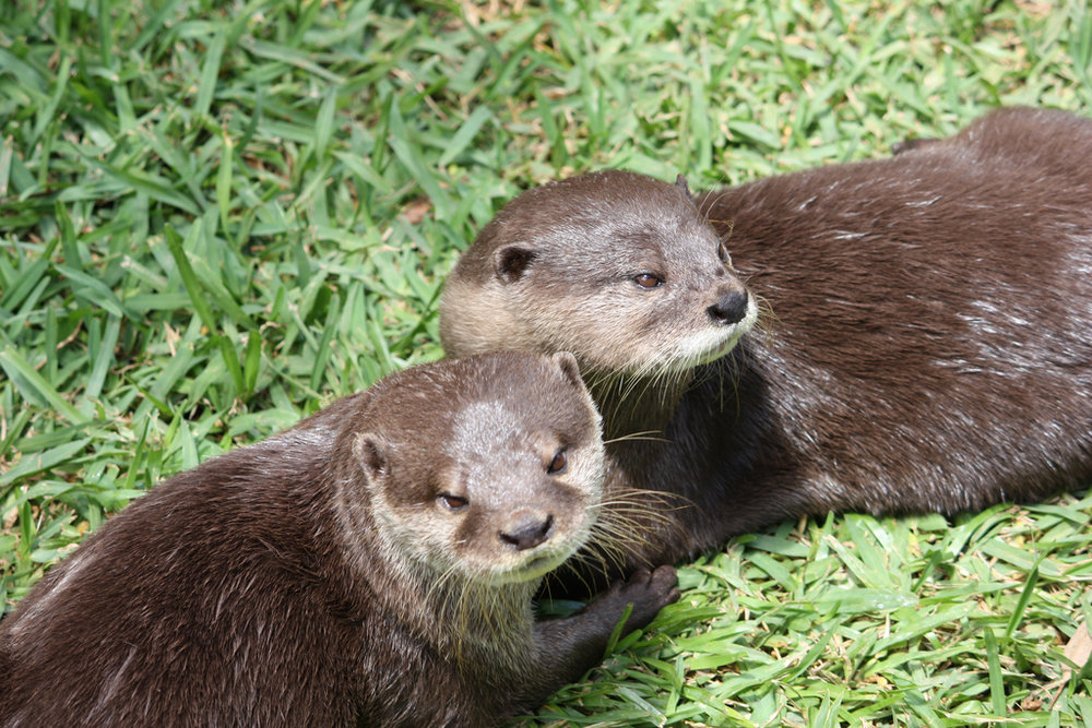 Plotting Otters Are Suspicious
