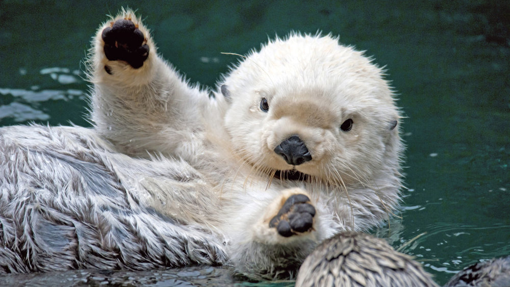 Otter Wants a Hug