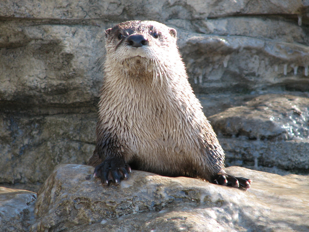 How Can Otter Help You Today