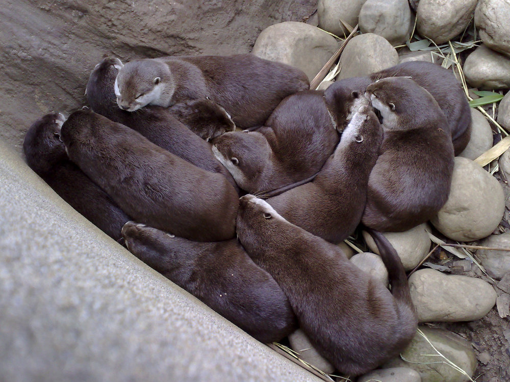 Nap Pile