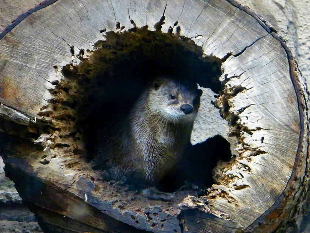 Drowsy Otter Would Like Some Privacy, Please