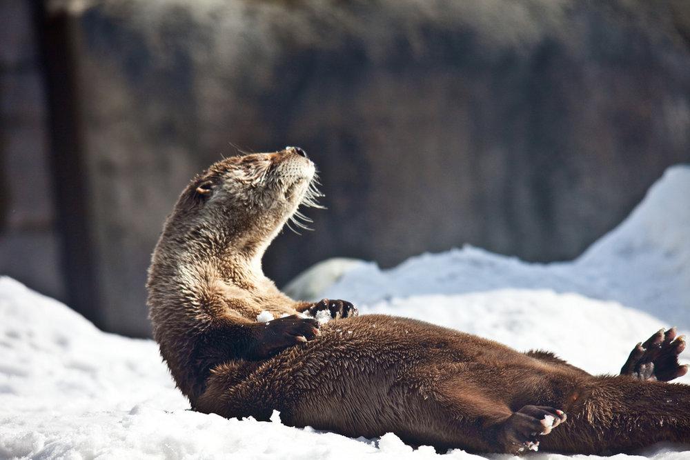 Otter Sit-Ups