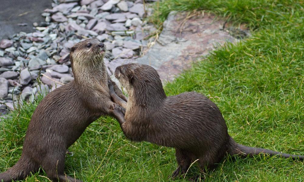 Otter Waltz
