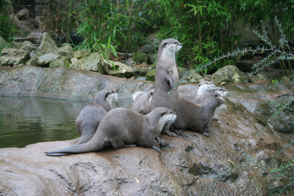 Otters and Meerkats