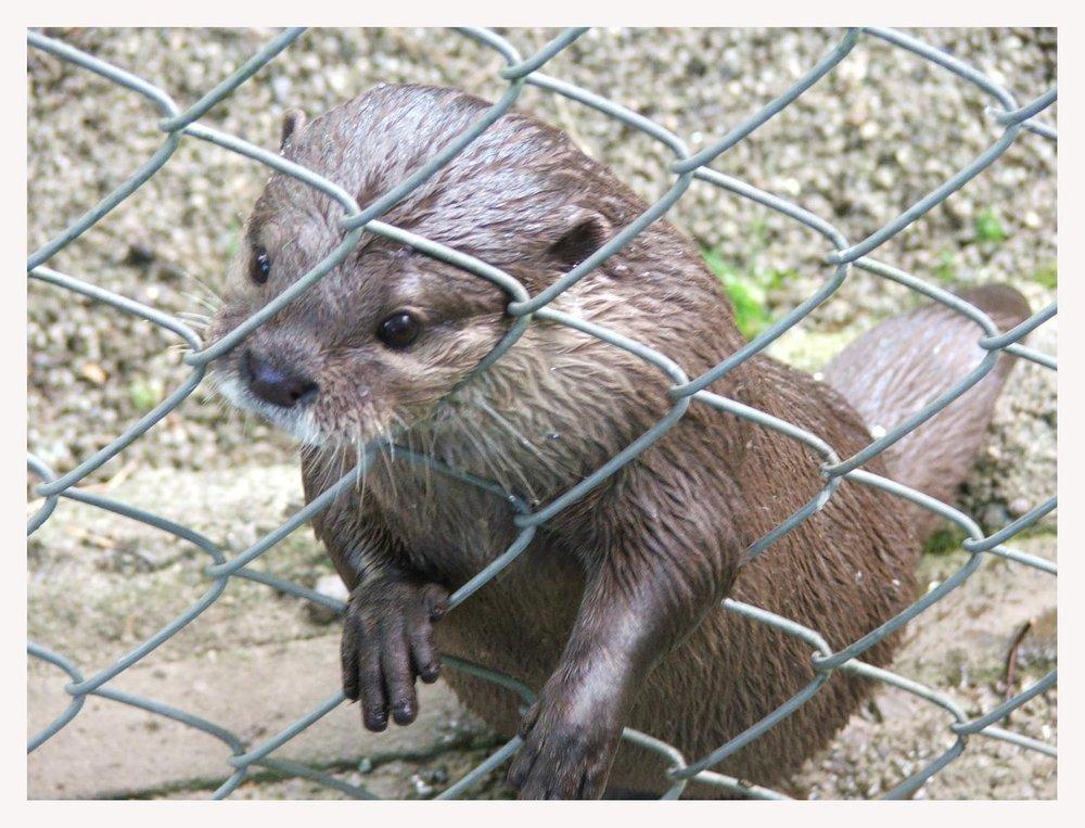 2009, 9-1 Daily Otter.jpg