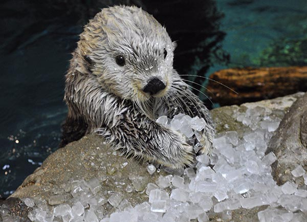 These Are My Ice Cubes, Human