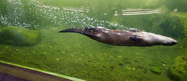 Upside Down Otter Torpedo!