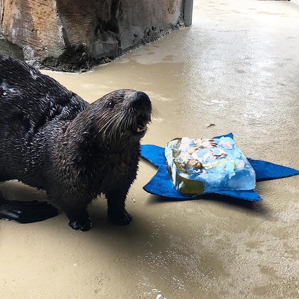 Sea Otter Can't Believe This Cake Is Just for Her