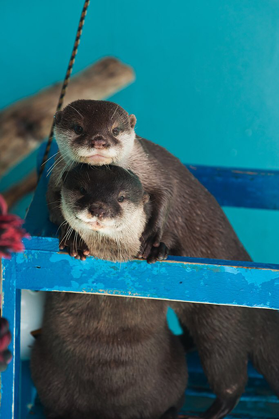 Otters Know How to Take a Couples Portrait