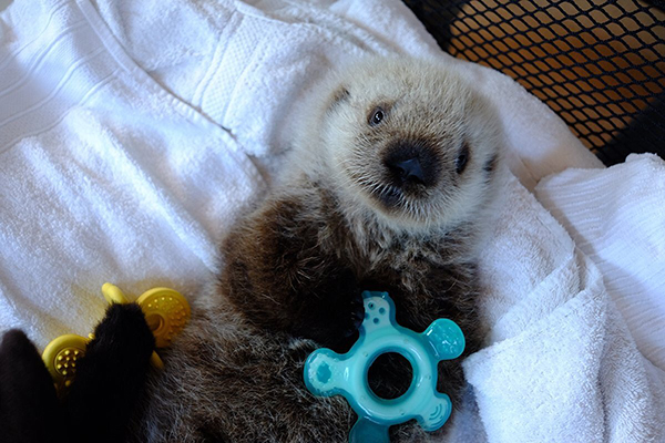 Vancouver Aquarium's Sea Otter Pup Has a New Name!