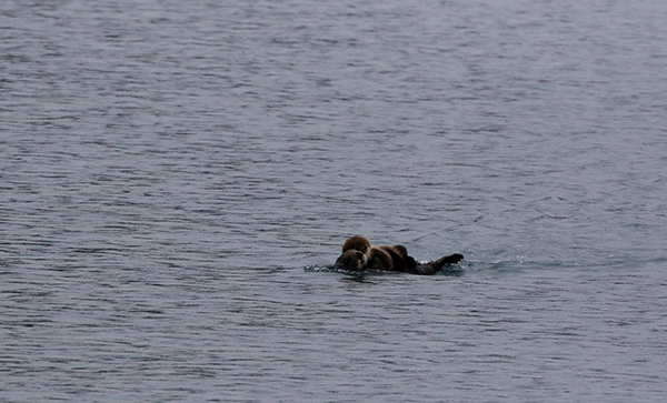 Mother and Pup Sea Otters Float in Wide Waters