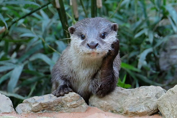 Otter Is Such a Patient Listener