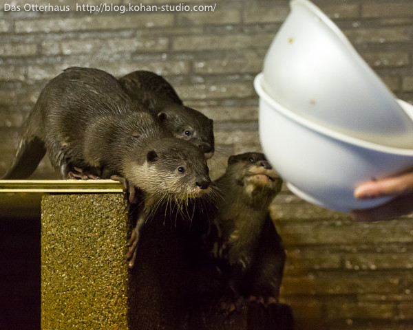 Otters Have Their Minds on Their Treats and Their Treats on Their Minds