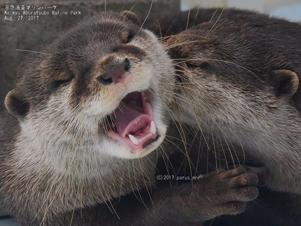Otter Happily Receives a Kiss