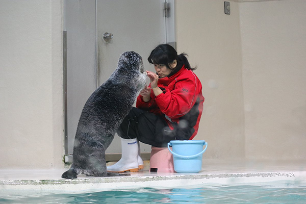 Sea Otter Has Something for Human