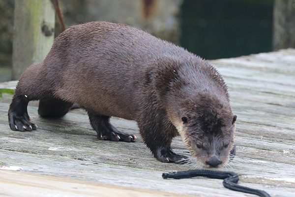 Otter Wonders What the Humans Use This For