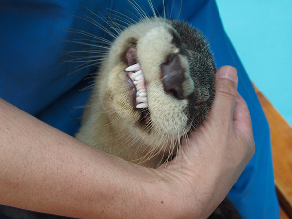 Otter, Your Smile Is a Little... Unsettling