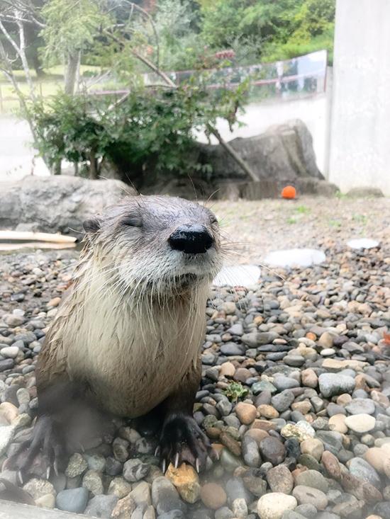 Shhh... Otter Is Meditating