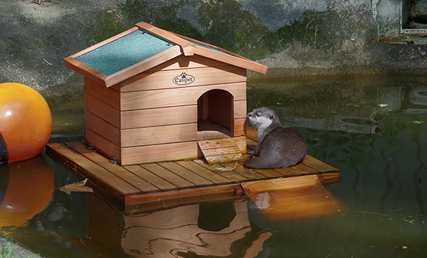 A Moat Doesn't Really Protect Against Other Otters