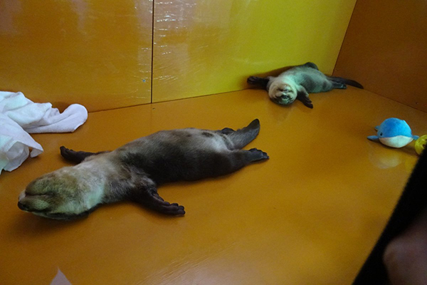 Otters Are Knackered, Truly Knackered