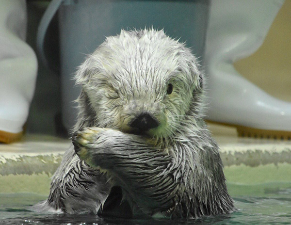 Otter Gives the Camera the Cutest Wink