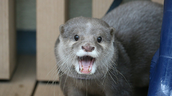 Otter Looks So Happy to See You!