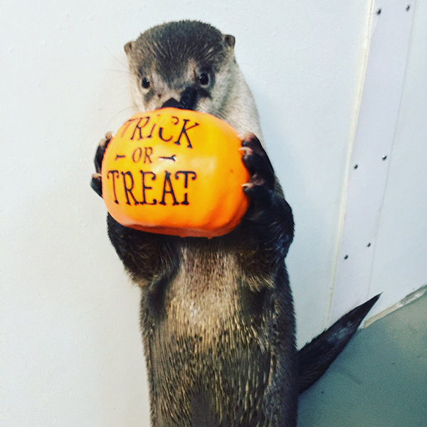 It's the Daily Otter's Halloween 2017 Mega-Post! 1